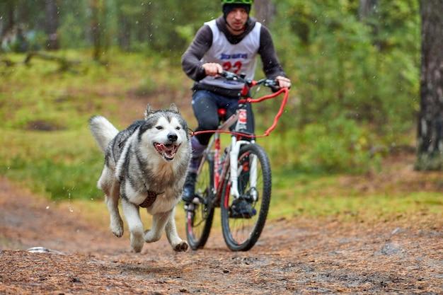 Хаски тянет велосипед с собачьим погонщиком