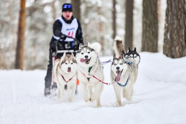 冬に犬ぞり競技をするハスキーそり犬