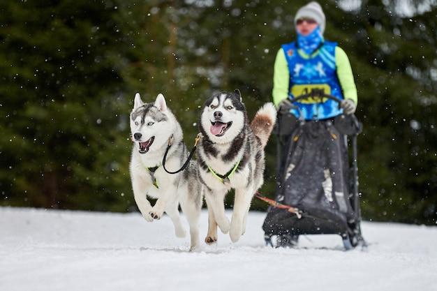Собачьи бега на собачьих упряжках