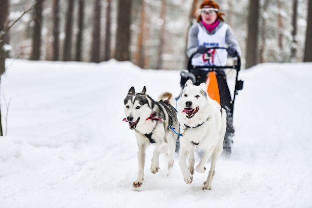 Собаки хаски тянут каюр на лыжах