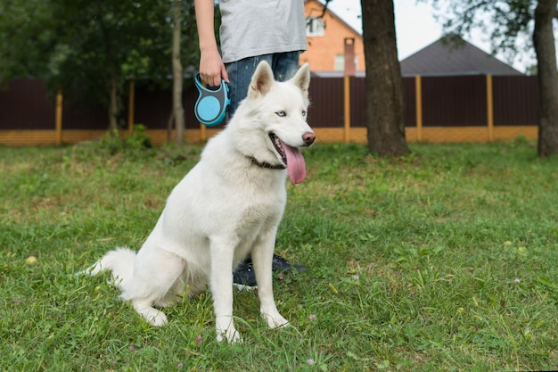Husky white with its owner