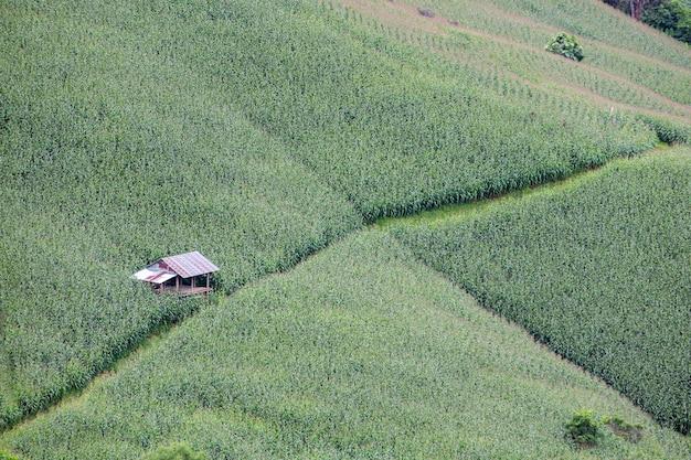 タイのメーホンソン県の丘にあるトウモロコシ畑の真ん中にある小屋