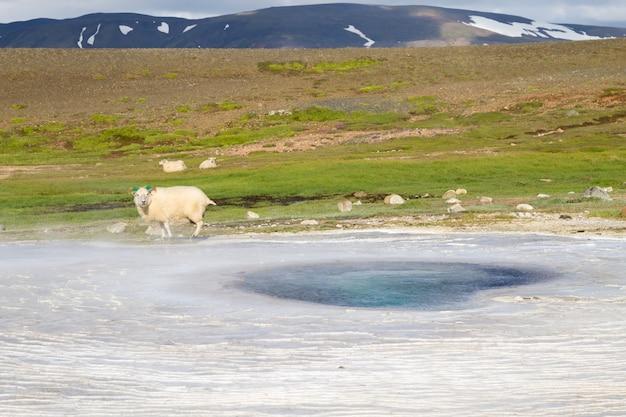 아이슬란드 흐베라벨리르 온천 지역. 아이슬란드의 고원