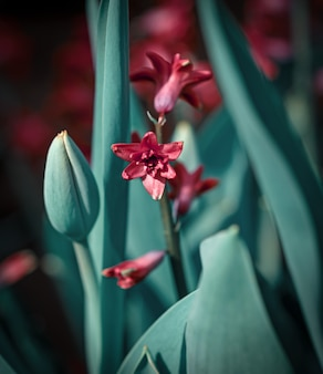 Hyacinth flower and green tulip leaves