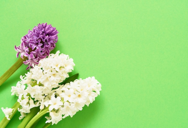 緑の背景にヒヤシンスの花。上面図、コピースペース。グリーティングカード。