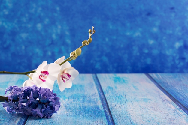 Hyacinth flower and white orchid on blue wood copy space