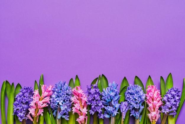紫の背景にヒヤシンスの花の境界線上面図コピースペースグリーティングカード