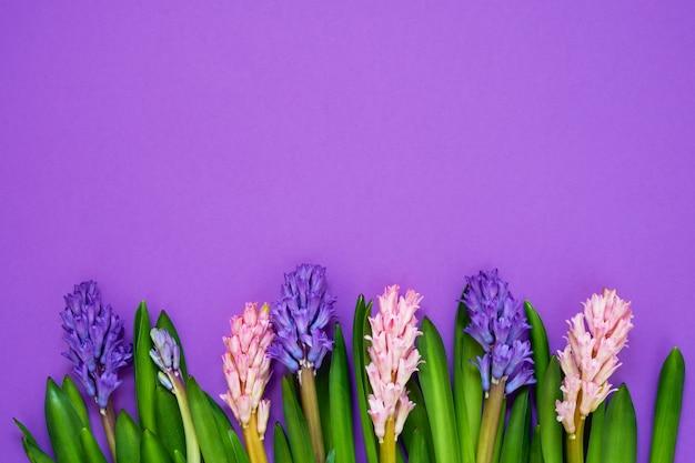 紫の背景にヒヤシンスの花の花束。上面図、コピースペース。母の日、誕生日、国際女性の日、バレンタインデーのコンセプト。グリーティングカード。
