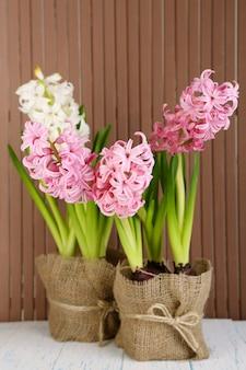 木製の背景のテーブルの上の鍋にヒヤシンスの花