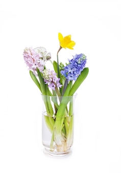 Hyacinth and narcissus on white