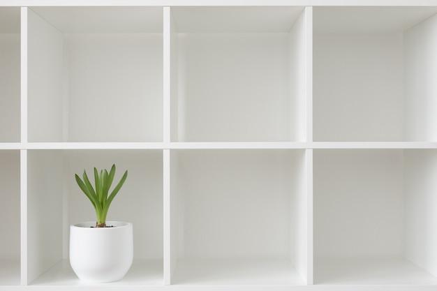 白い鉢にヒヤシンスの植物。ラックに花を咲かせます。インテリアの背景。
