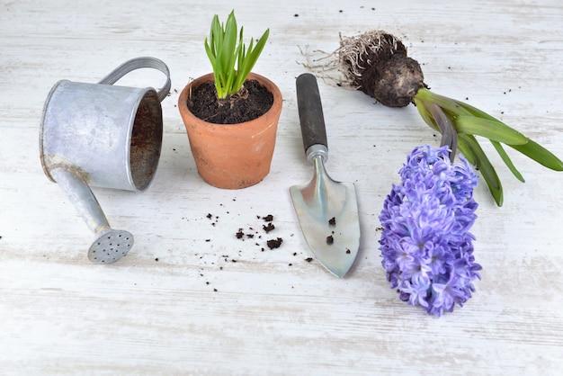Hyacinth, seeds; flower pots an shovel arranged on white