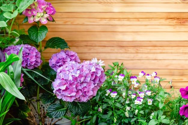 アジサイとパンジーの家の花バルコニーガーデンベランダモダンテラスホームガーデニング