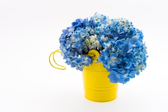 Hydrangea flower bouquet isolated