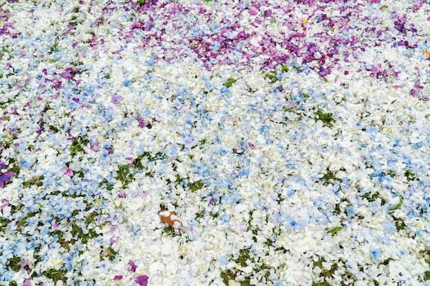 Hydrangea flower petals background