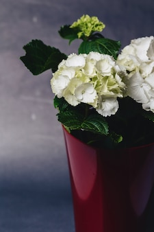 Гортензия в вазе на темном фоне