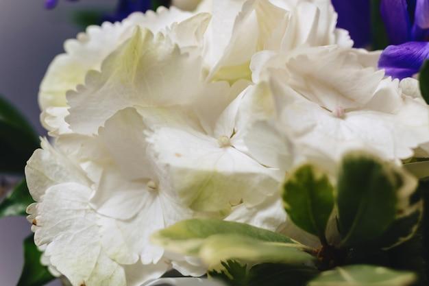 Hydrangea in vase on dark background