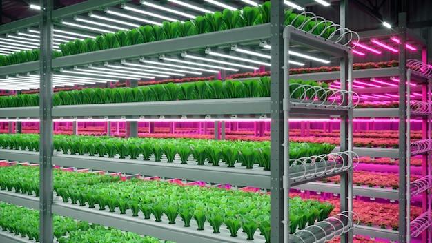 전시 공간 창고에 있는 수경 실내 채소 공장. 농장 수경법의 내부입니다. 그린 샐러드. led 번개와 함께 온실에서 성장 하는 양상추 로마.