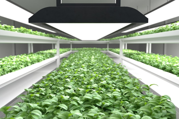 Hydroponic vegetable plant factory