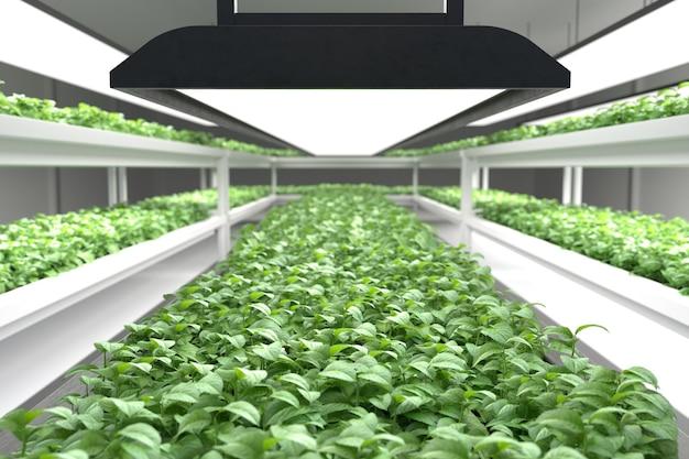 水耕野菜工場