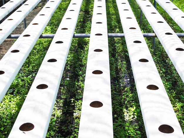 Hydroponic vegetable planting holes on steel pipe cultivation planting in holes on iron tracks equipment