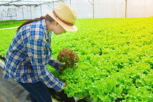 Девушка молодого азиатского фермера милая работая в ферме овощей hydroponic. она смотрит и использует руки проверяет качество зеленого салата.