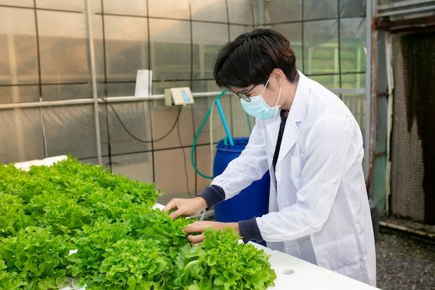 水耕栽培農場、科学者または労働者は、レタスの有機水耕栽培をテストしてデータを収集します。