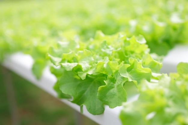 Hydroponics method of growing plants