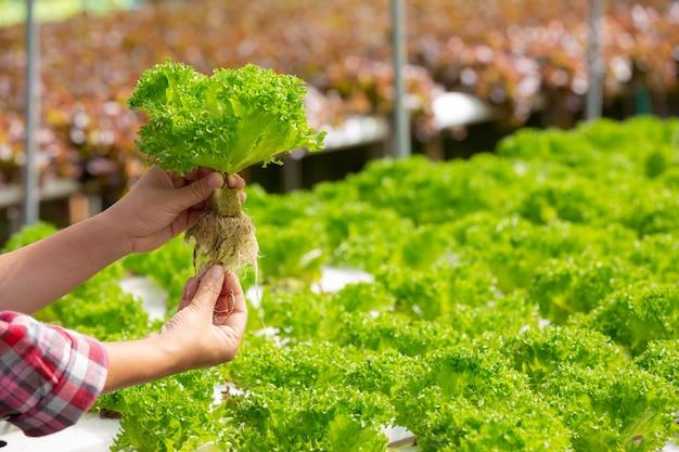 수경법 시스템, 건강을 위해 토양을 사용하지 않고 야채와 허브 심기