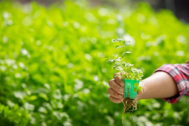 水耕栽培システム、健康のために土壌を使わずに野菜やハーブを植える
