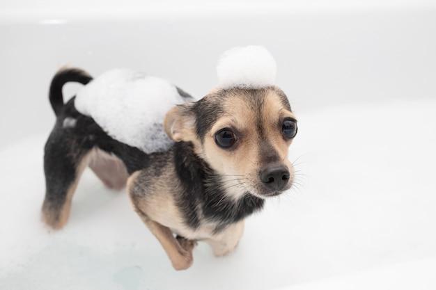 犬の衛生と清潔