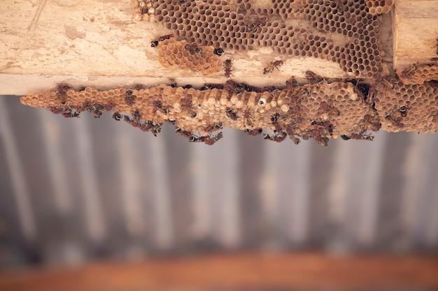 木の上のhymenoptera。ワスプの巣。