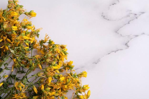 Гиперикум сушеные лекарственные травы на мраморном столе. для настоек и чая в фитотерапии