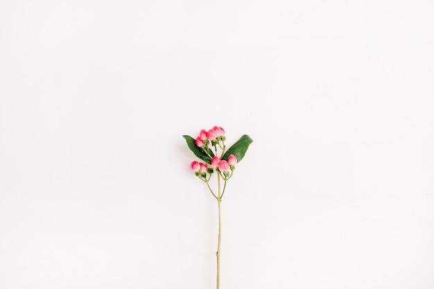 白い背景にオトギリソウの花の枝。平置き