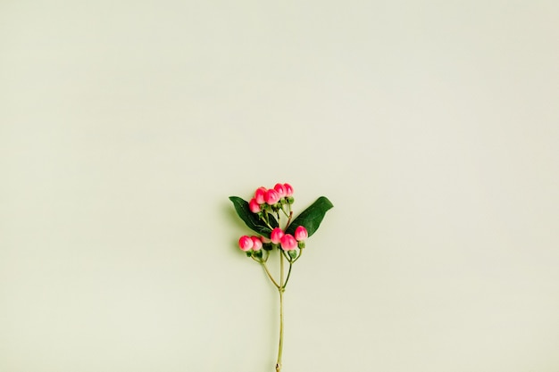 Плоская кладка цветка зверобоя весной минимальная концепция