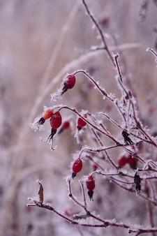 コピースペースのある凍った赤いブライヤーフルーツの小枝の氷と雪