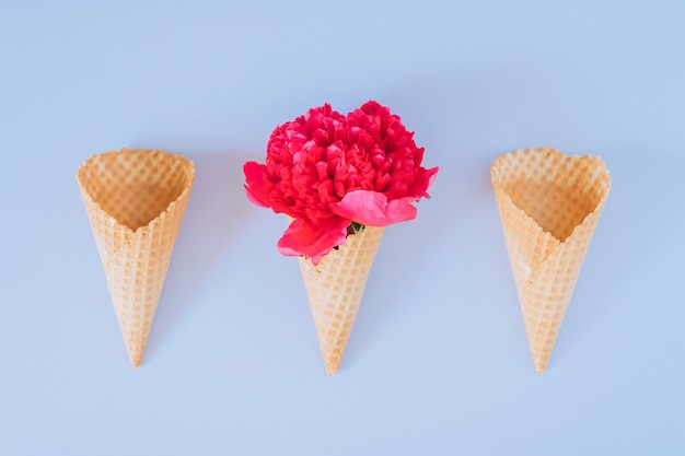Ice cream cones with pink peony on blue, flat lay, minimalism