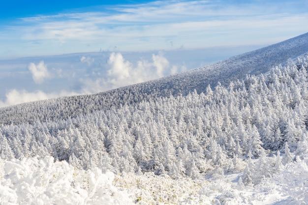 蔵王山または蔵王温泉スキー場の山形、東北、日本の曇りの青い空の下で凍った雪の山に覆われた氷の木や雪のモンスター
