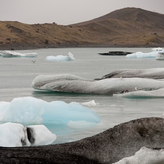 Icebergs floating in glacial lake next to coastline