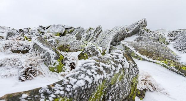 雪と氷の薄い層の下にある氷で覆われた苔で覆われた岩