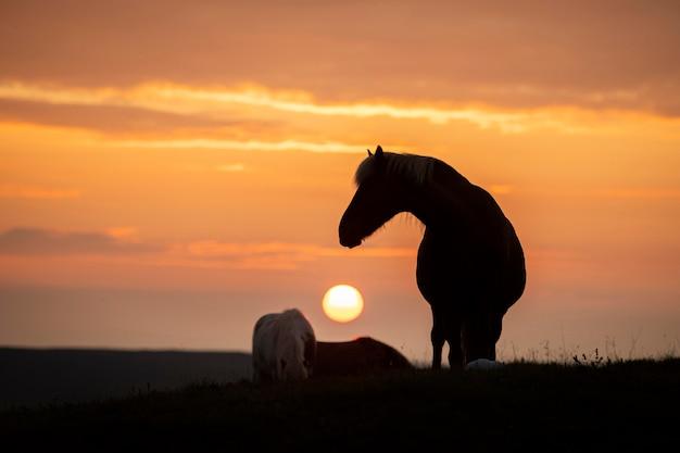 Исландский пейзаж красивого жеребца