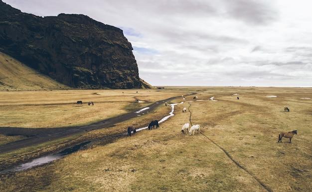 アイスランドの緑の丘とパノラマ。馬との空中ショット