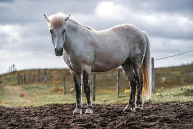 아이슬란드의 경치 좋은 자연에서 아이슬란드 말입니다.