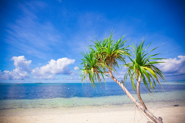 Ideal tropical beach with turquoise water and white sand on a desert island