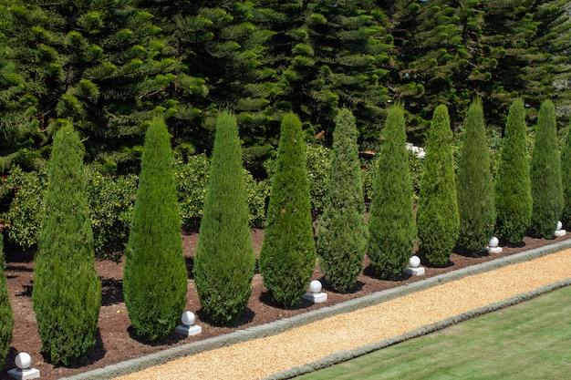 Идеально прямая аллея кипарисов в садах бахаи