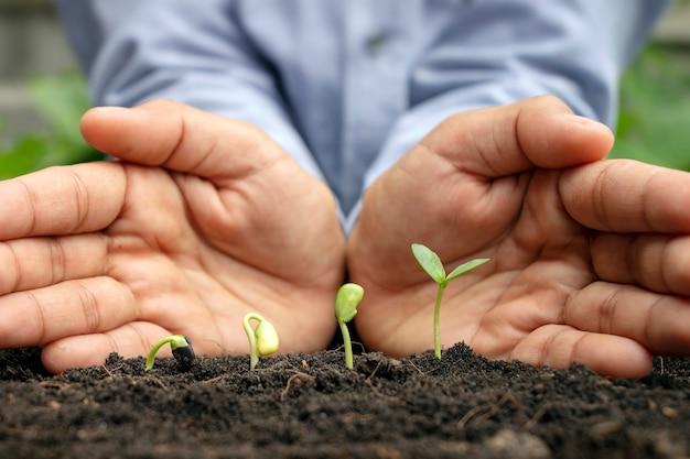 Идеи о выращивании растений и растений. деревья, растущие на плодородной почве, соответственно прорастание дерева и руки, на которые сажают растение.