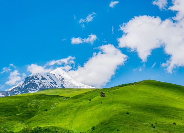 青い空、新緑の牧草地、雪をかぶった山頂の牧歌的な風景。ジョージア州スヴァネティ地方 Premium写真