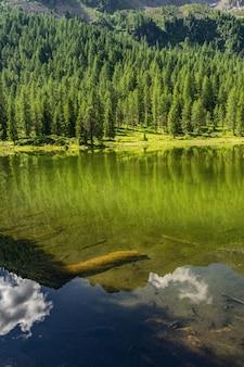 Идиллический пейзаж с зеленым лесом и озером