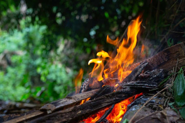 Зажигание костра в лесу для кемпинга.
