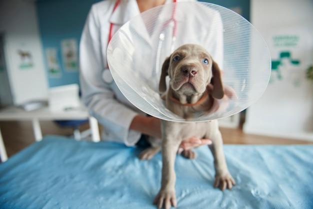 Больная собака в ошейнике для домашних животных